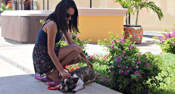 A Pet Friendly Alternative Near Downtown Cabo San Lucas!